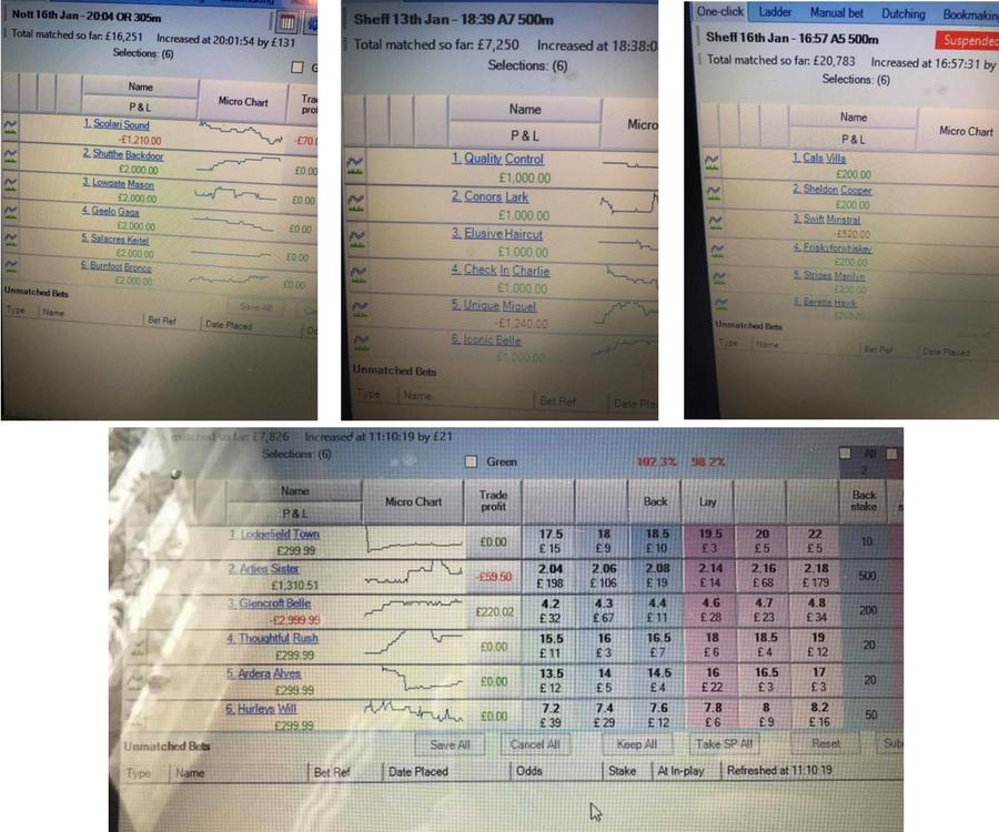 Greyhound Lay Service Screenshots