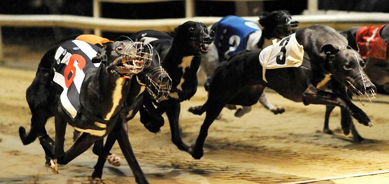 UK Greyhound Tips